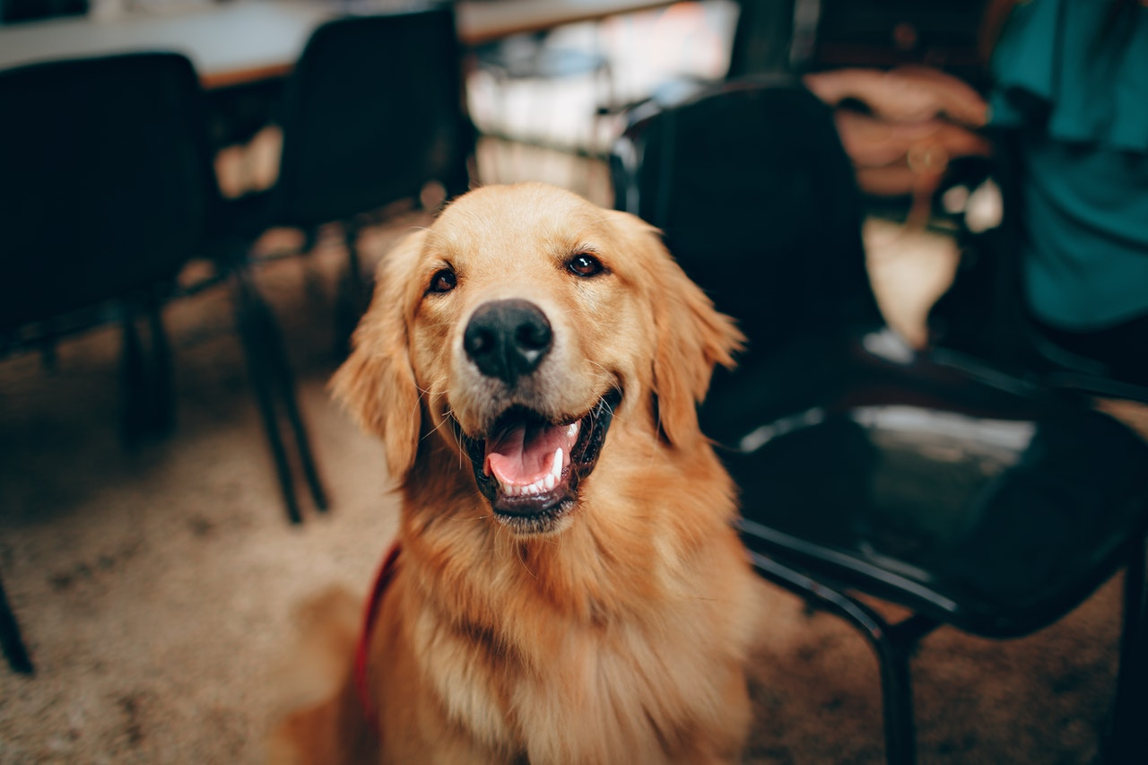 5 redenen waarom een hond een verrijking is